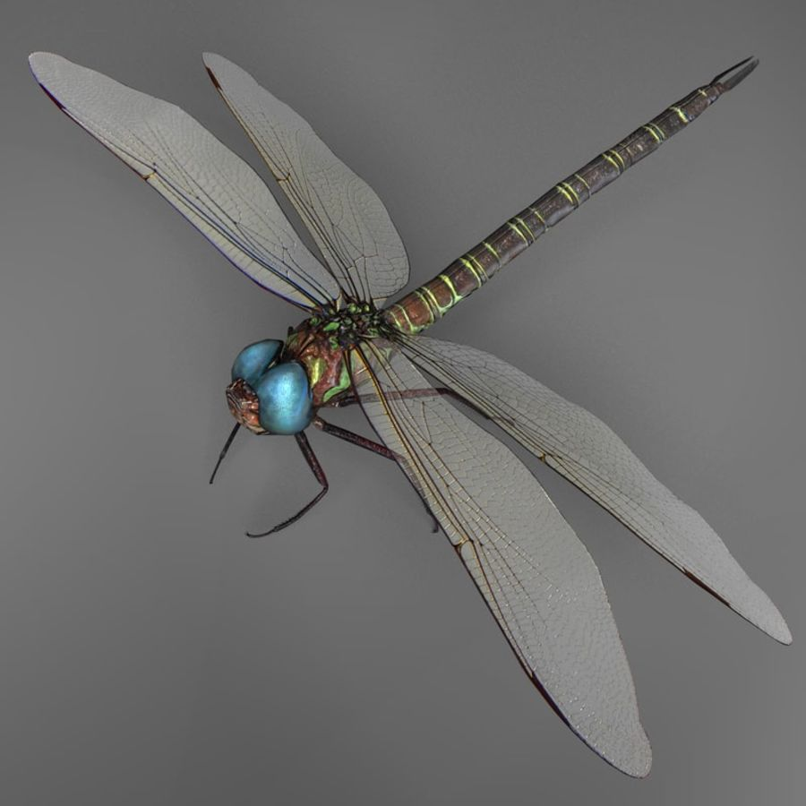 Dragon Fly royalty-free 3d model - Preview no. 5