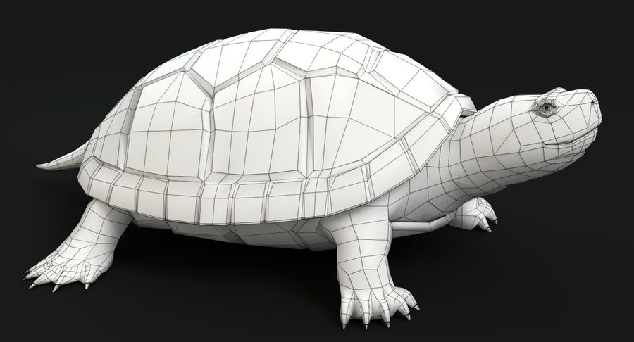 Turtle royalty-free 3d model - Preview no. 11