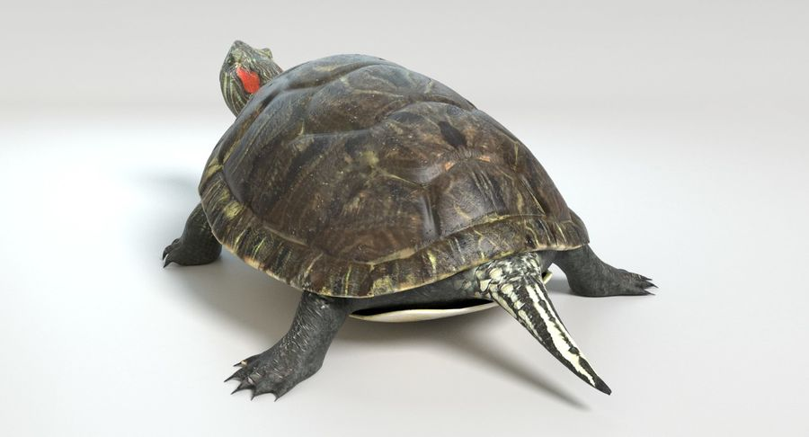 Turtle royalty-free 3d model - Preview no. 6