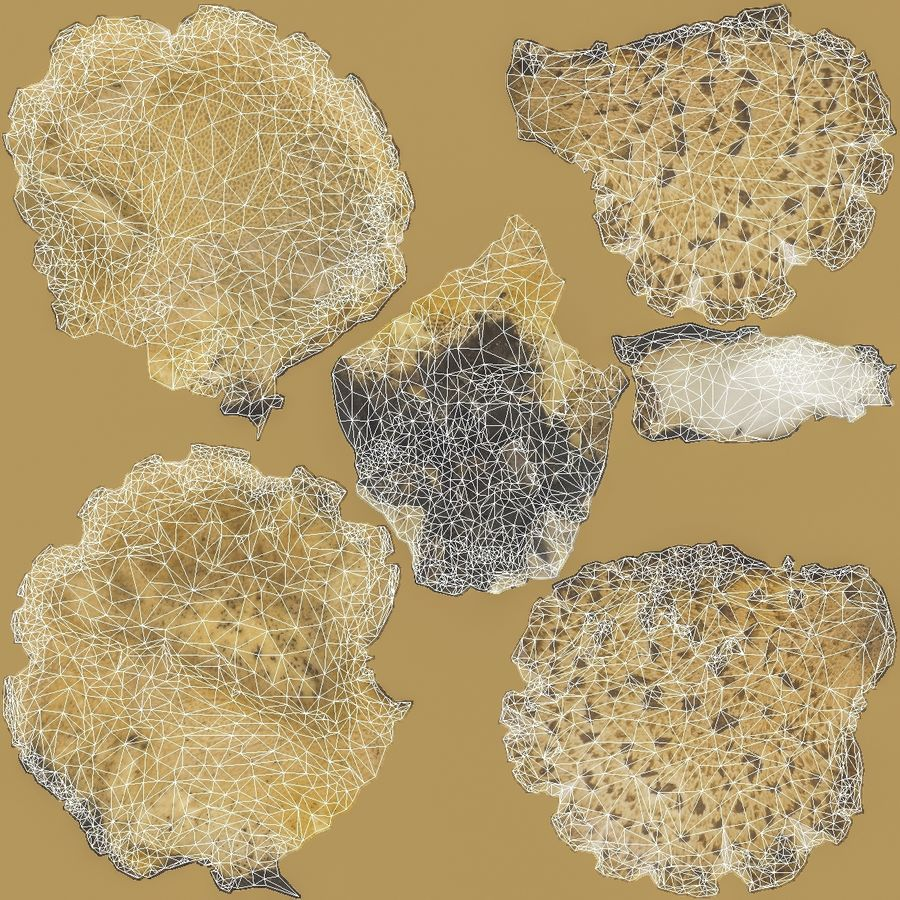 Grzyb Polypore 5 Lowpoly royalty-free 3d model - Preview no. 14