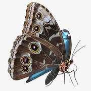 Peleides Blue Morpho Butterfly with Fur 3d model