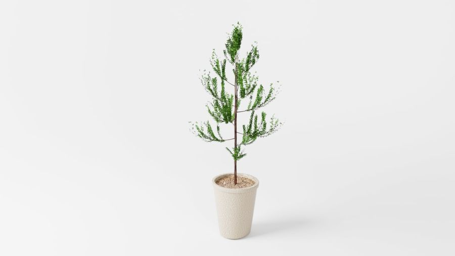 Petit arbre / plante avec pot royalty-free 3d model - Preview no. 2