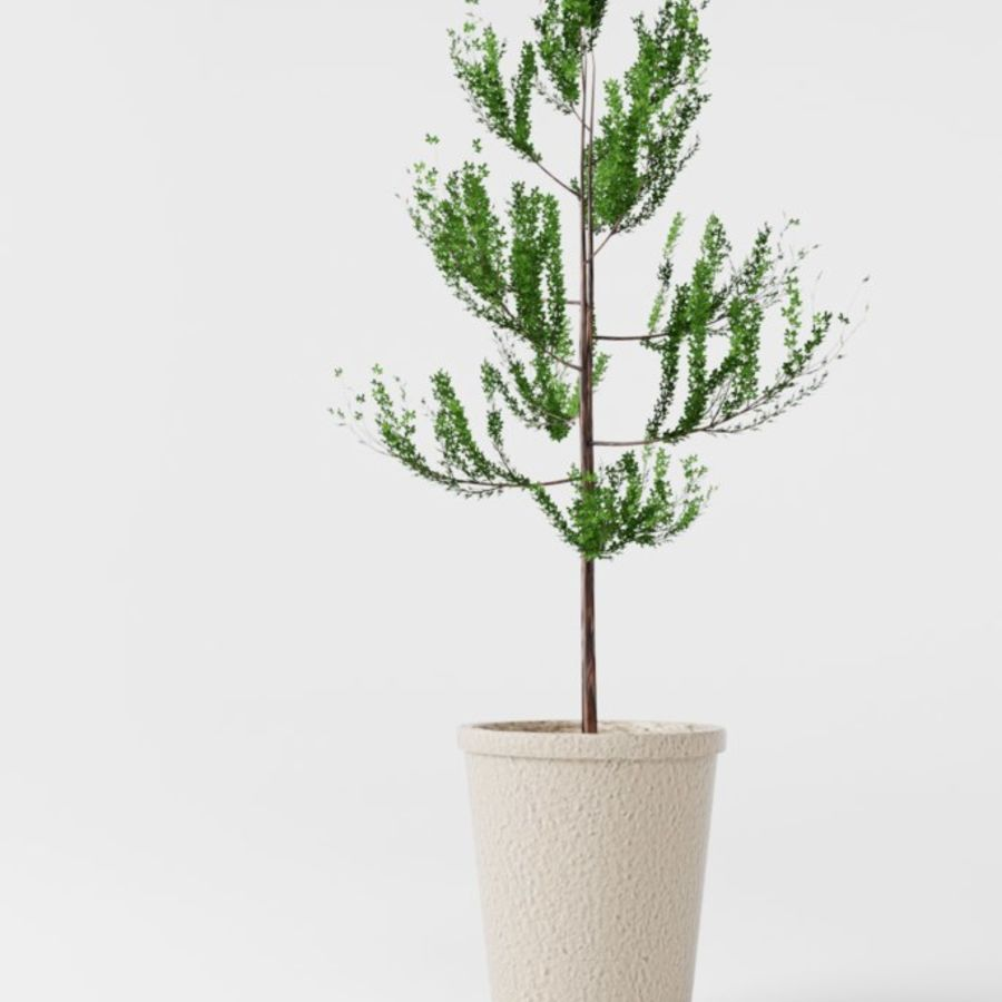Petit arbre / plante avec pot royalty-free 3d model - Preview no. 1