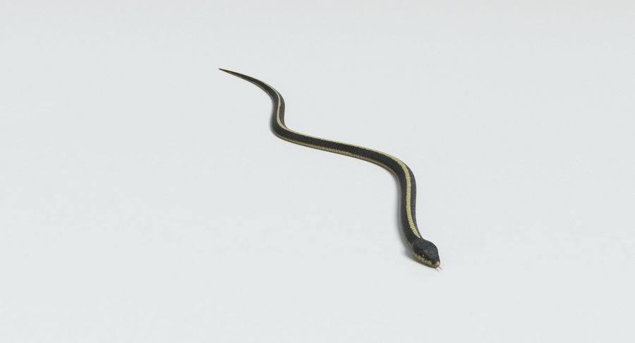 Garter Snake royalty-free 3d model - Preview no. 5