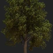 Animated Oak tree 3d model