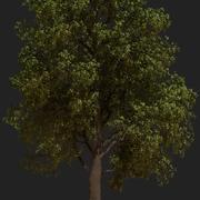 アニメーションオークの木 3d model