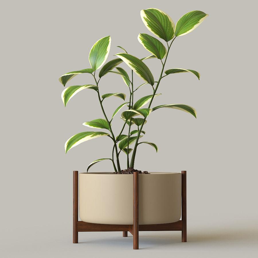 화분 식물 royalty-free 3d model - Preview no. 4