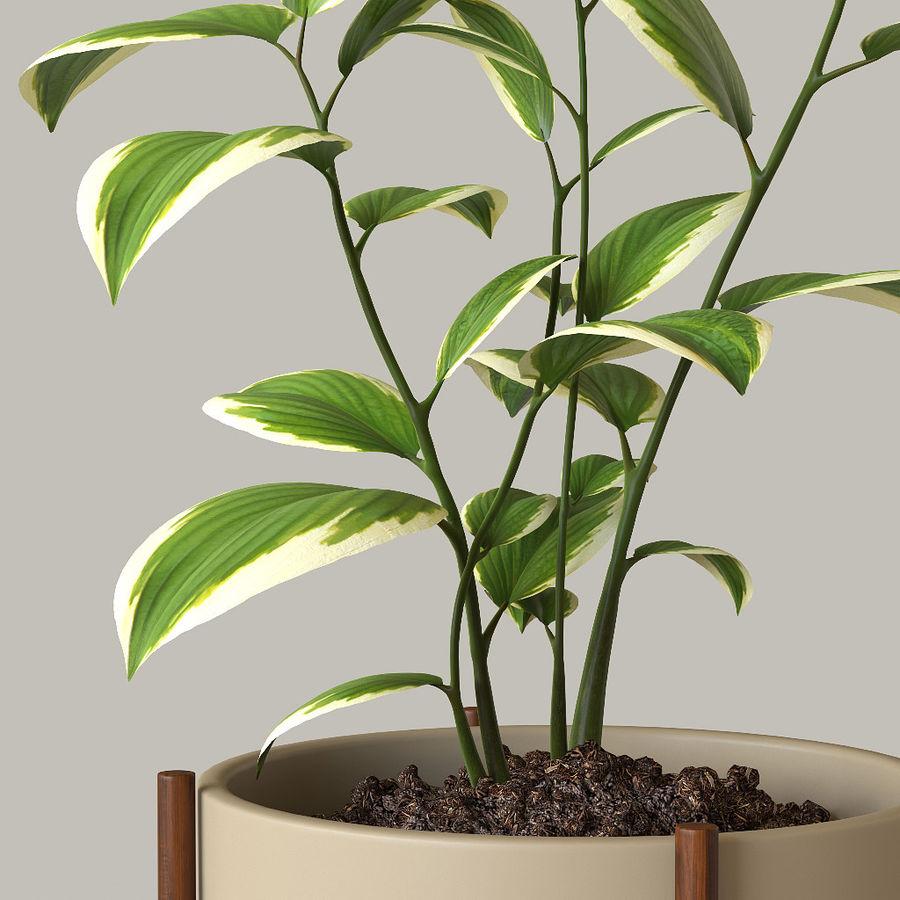 화분 식물 royalty-free 3d model - Preview no. 2