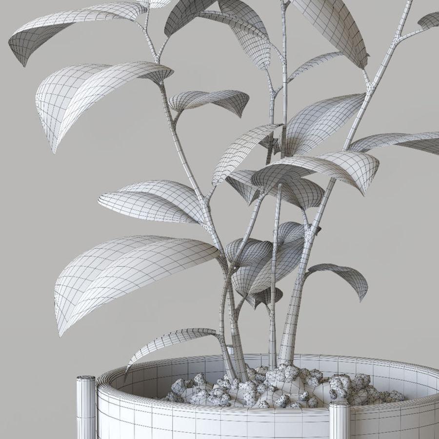 화분 식물 royalty-free 3d model - Preview no. 7