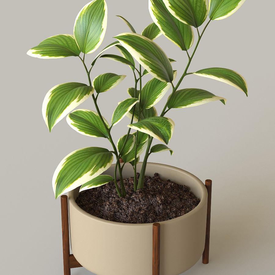 화분 식물 royalty-free 3d model - Preview no. 3