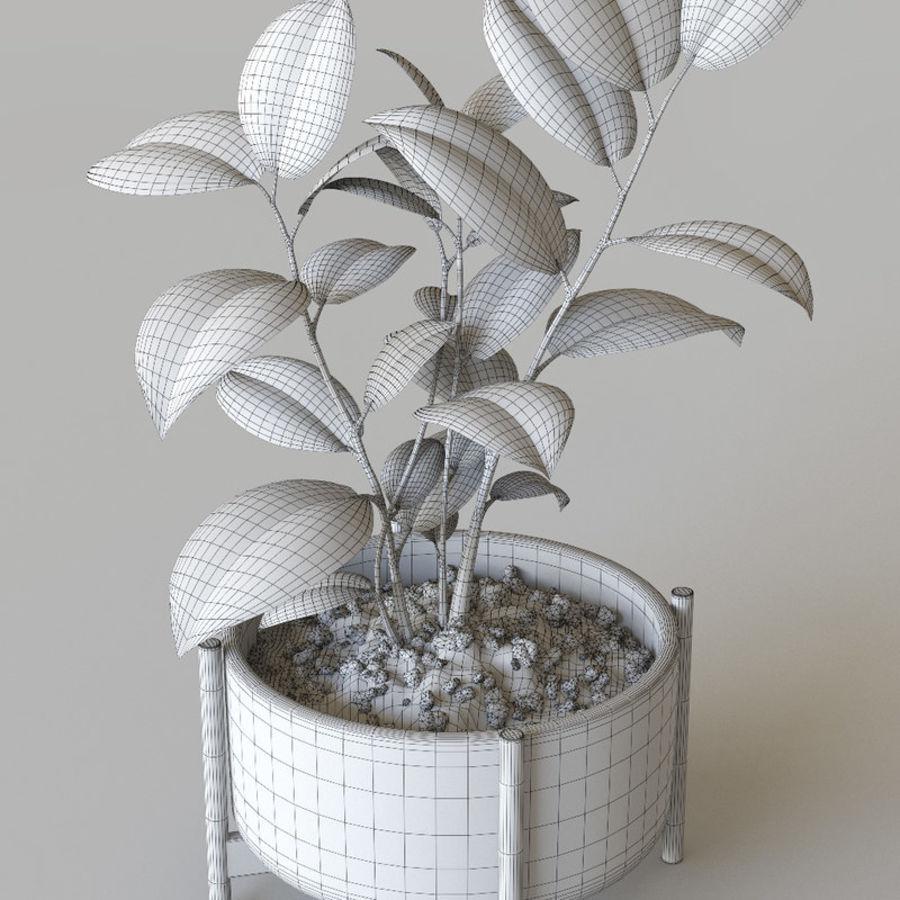 화분 식물 royalty-free 3d model - Preview no. 8