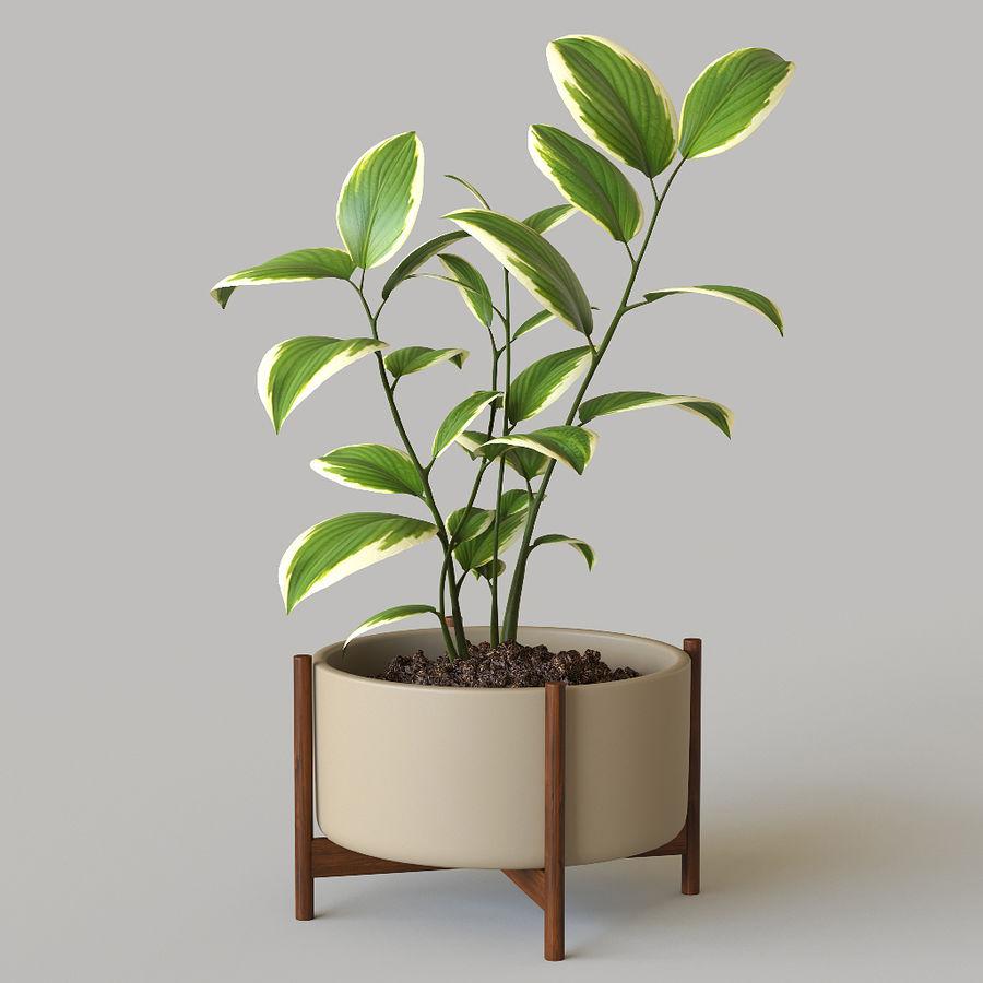 화분 식물 royalty-free 3d model - Preview no. 1