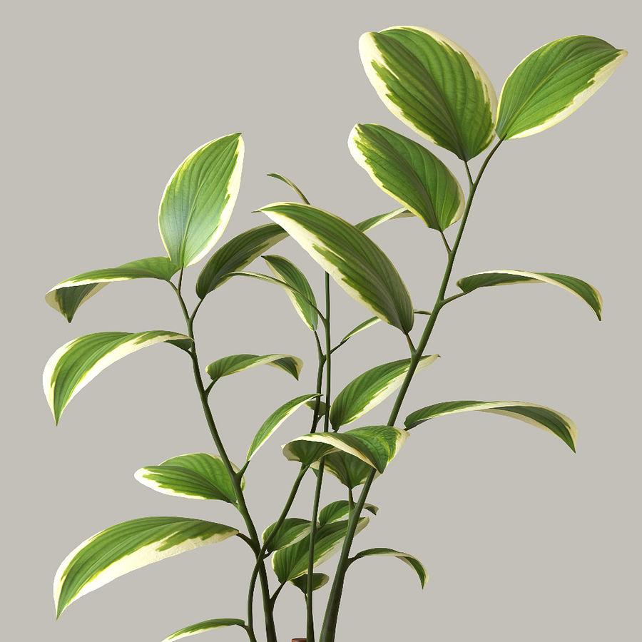 화분 식물 royalty-free 3d model - Preview no. 5