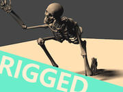 RIGGED Skeleton Model 3d model