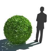 Hedge Bush 3d model