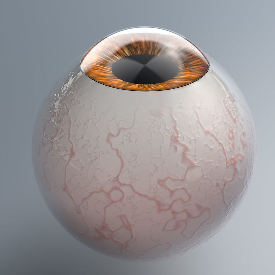 Realist İnsan Gözü - Teçhizatlı royalty-free 3d model - Preview no. 5