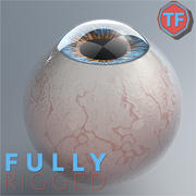 Realist Human Eye - With Rig 3d model