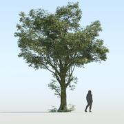 Árvore Genérica v2 3d model