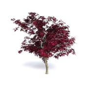Red Japanese Maple 3d model