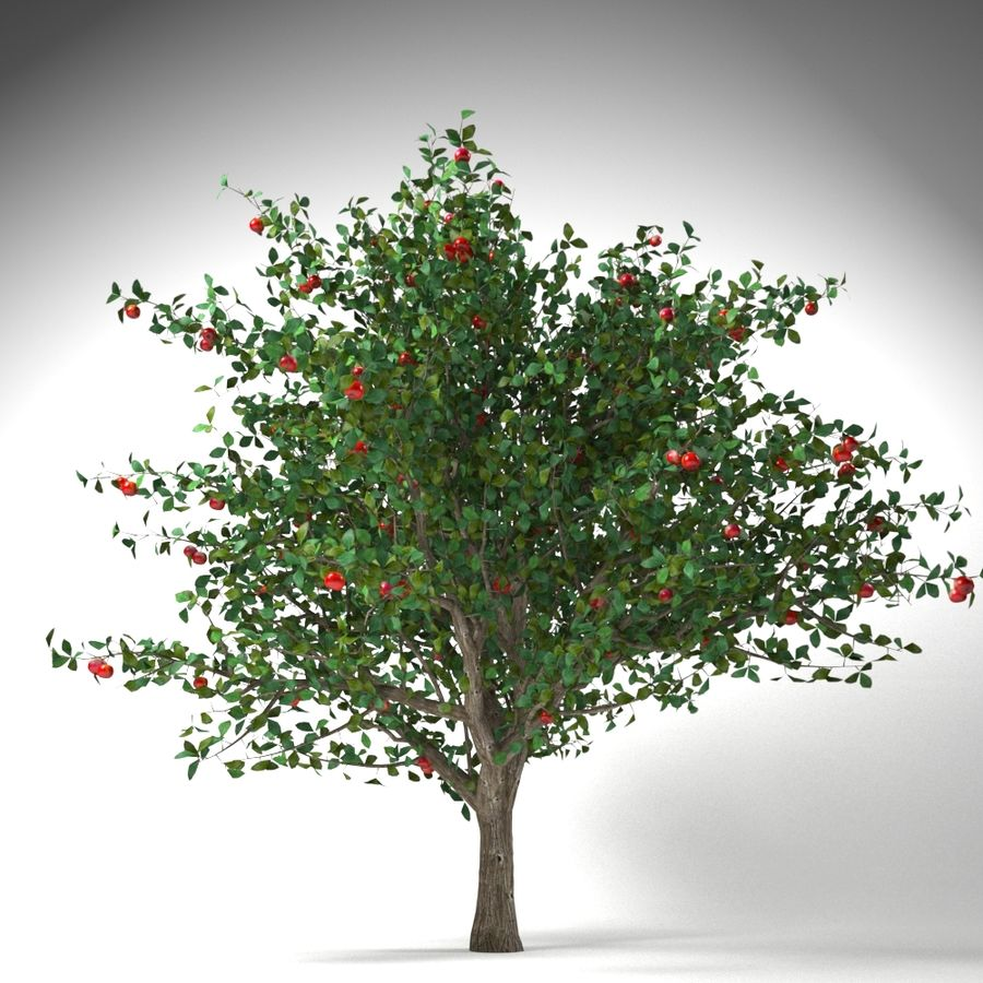 apple tree 5.5 mrter malus domestica royalty-free 3d model - Preview no. 3