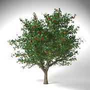 사과 나무 5.5 mrter malus domestica 3d model