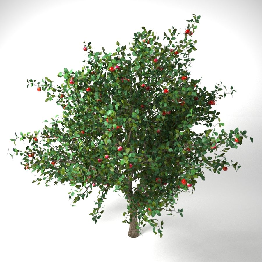 apple tree 5.5 mrter malus domestica royalty-free 3d model - Preview no. 5