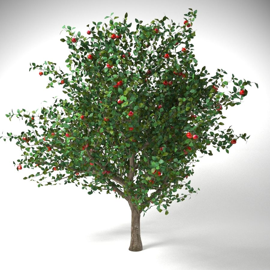 apple tree 5.5 mrter malus domestica royalty-free 3d model - Preview no. 4