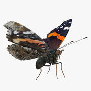 Red Admiral Butterfly Flying Pose 3d model