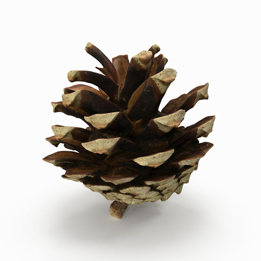 Pine Cone 3D Model $19 - .max .obj .fbx .dxf .dae - Free3D