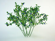 blueberry vaccinium 3d model