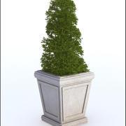 식물 냄비 3d model