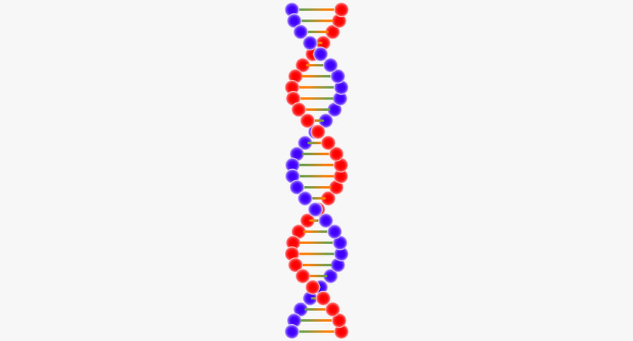 DNA royalty-free 3d model - Preview no. 6
