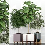 Collection de plantes 67 3d model