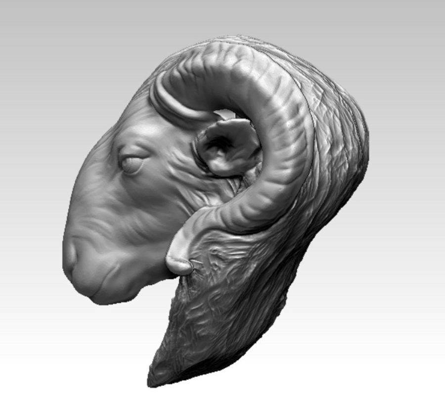 Ram head royalty-free 3d model - Preview no. 5