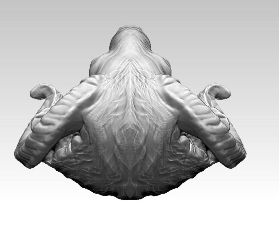 Ram head royalty-free 3d model - Preview no. 7
