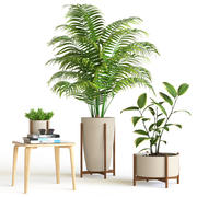 植物集 3d model