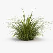 Wild Tall Grass 3d model
