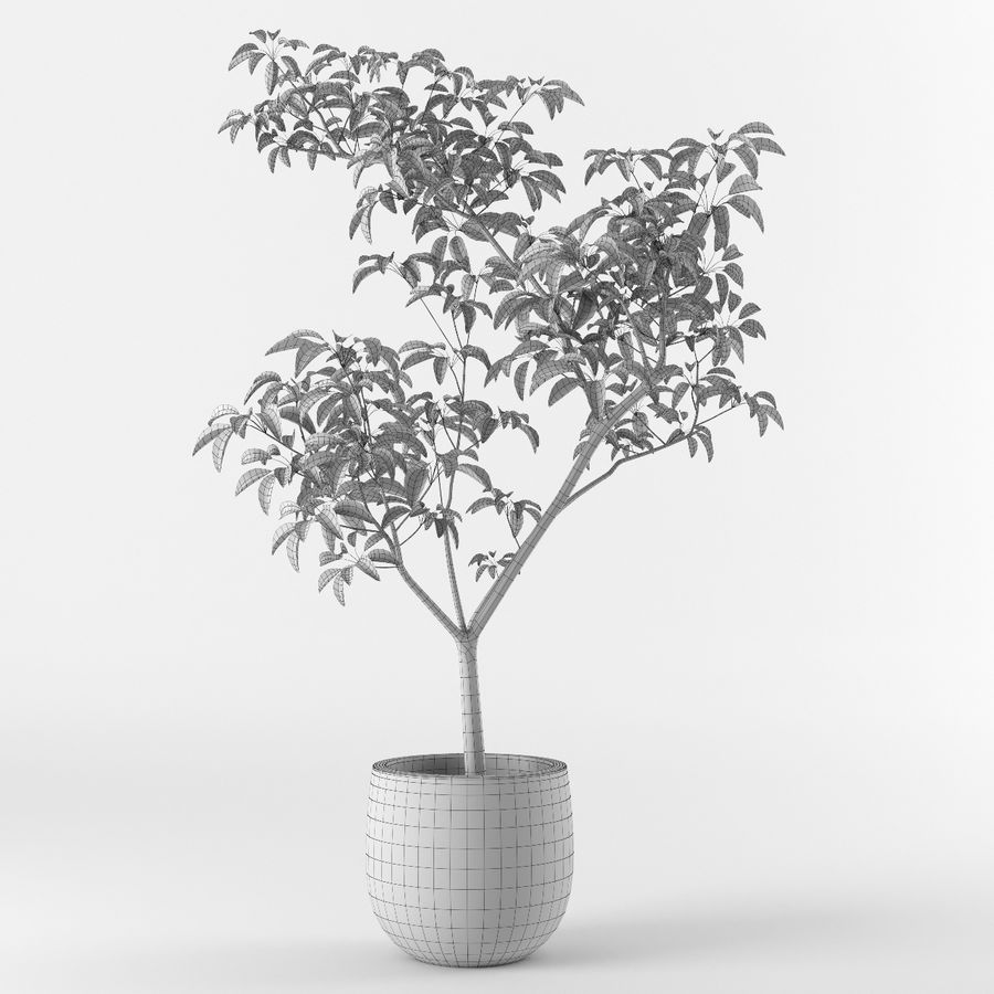 Small tree in pot royalty-free 3d model - Preview no. 6