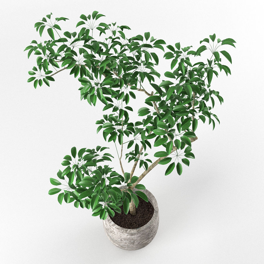 Small tree in pot royalty-free 3d model - Preview no. 3