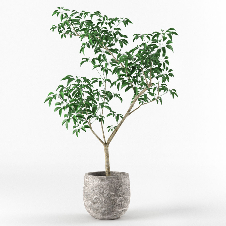 Small tree in pot royalty-free 3d model - Preview no. 2