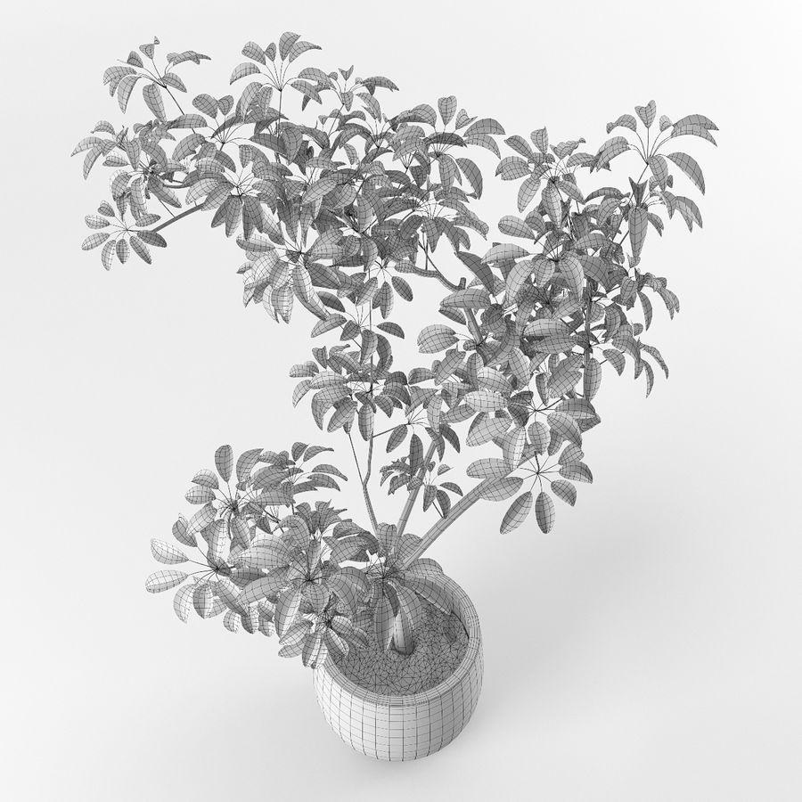 Small tree in pot royalty-free 3d model - Preview no. 7