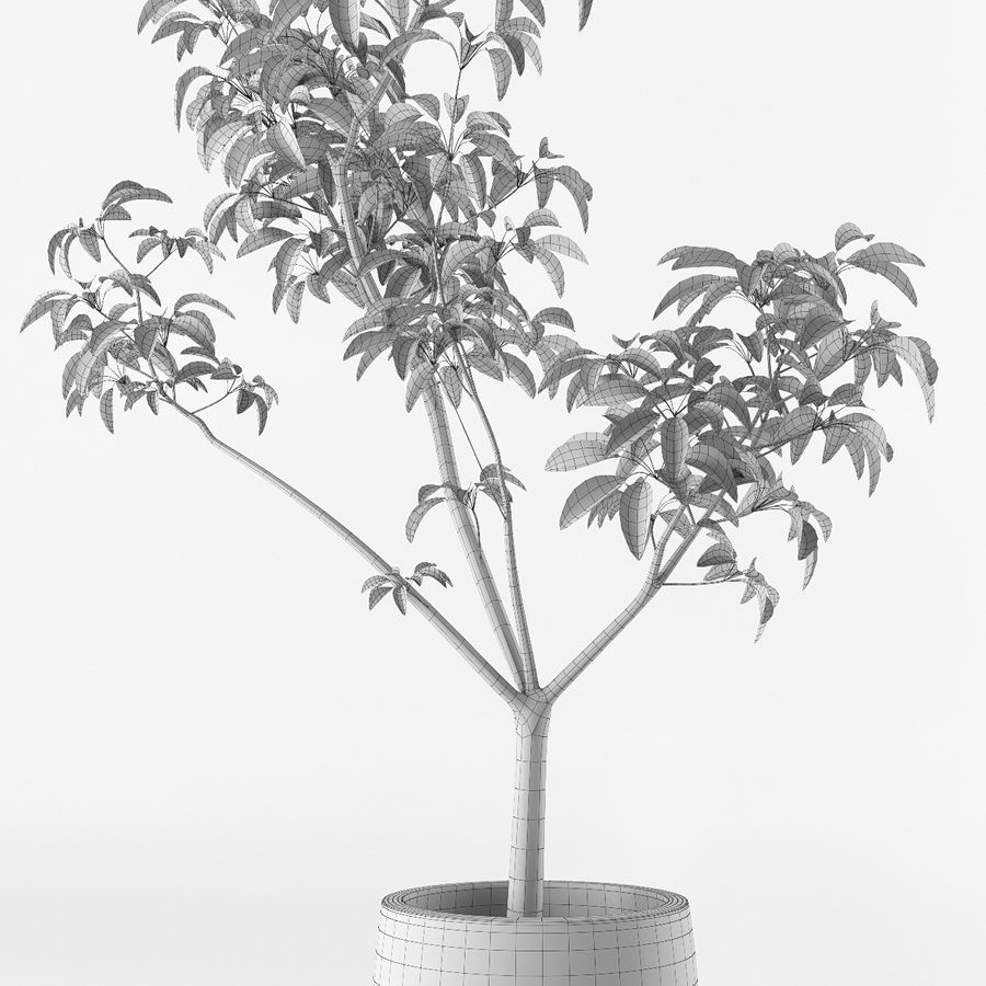 Small tree in pot royalty-free 3d model - Preview no. 8
