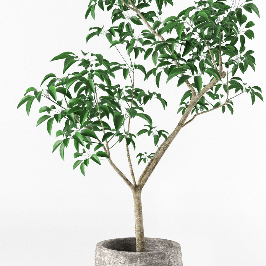 Small tree in pot royalty-free 3d model - Preview no. 4