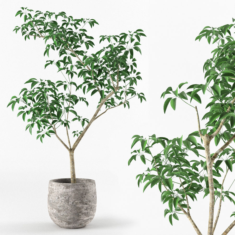 Small tree in pot royalty-free 3d model - Preview no. 1