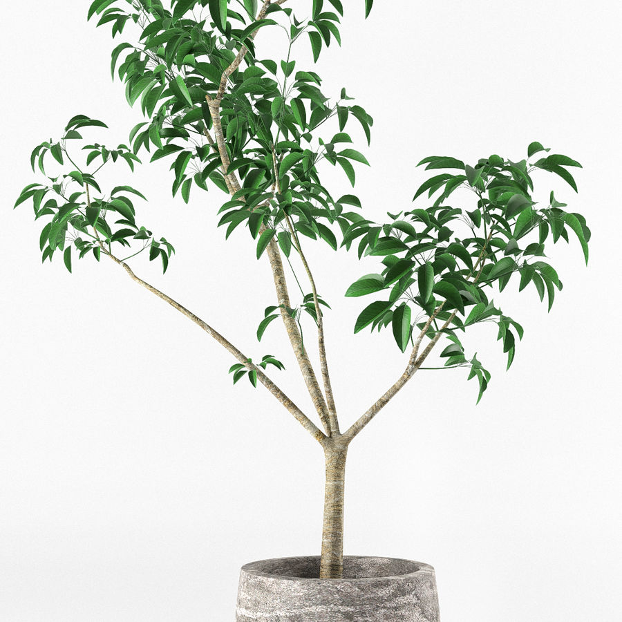 Small tree in pot royalty-free 3d model - Preview no. 5