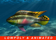 Very low poly animated Kribensis fish 3d model