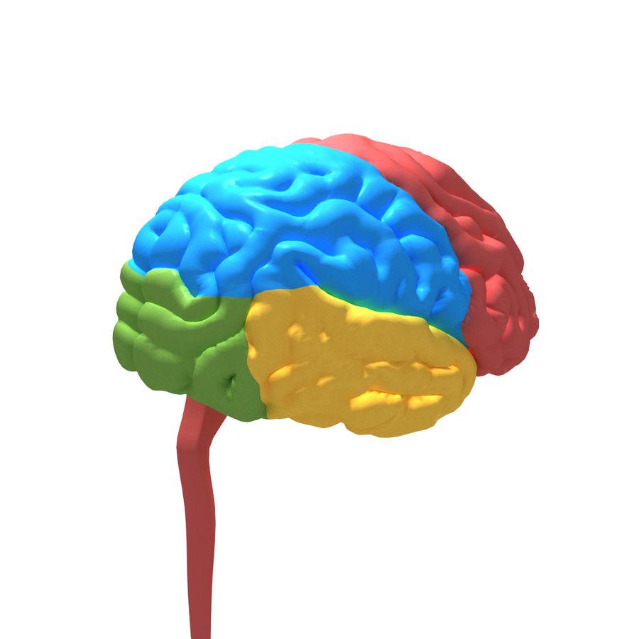 Anatomy Human Brain Nervous Cerebrum 3D Model $9 - .stl .obj .fbx ...
