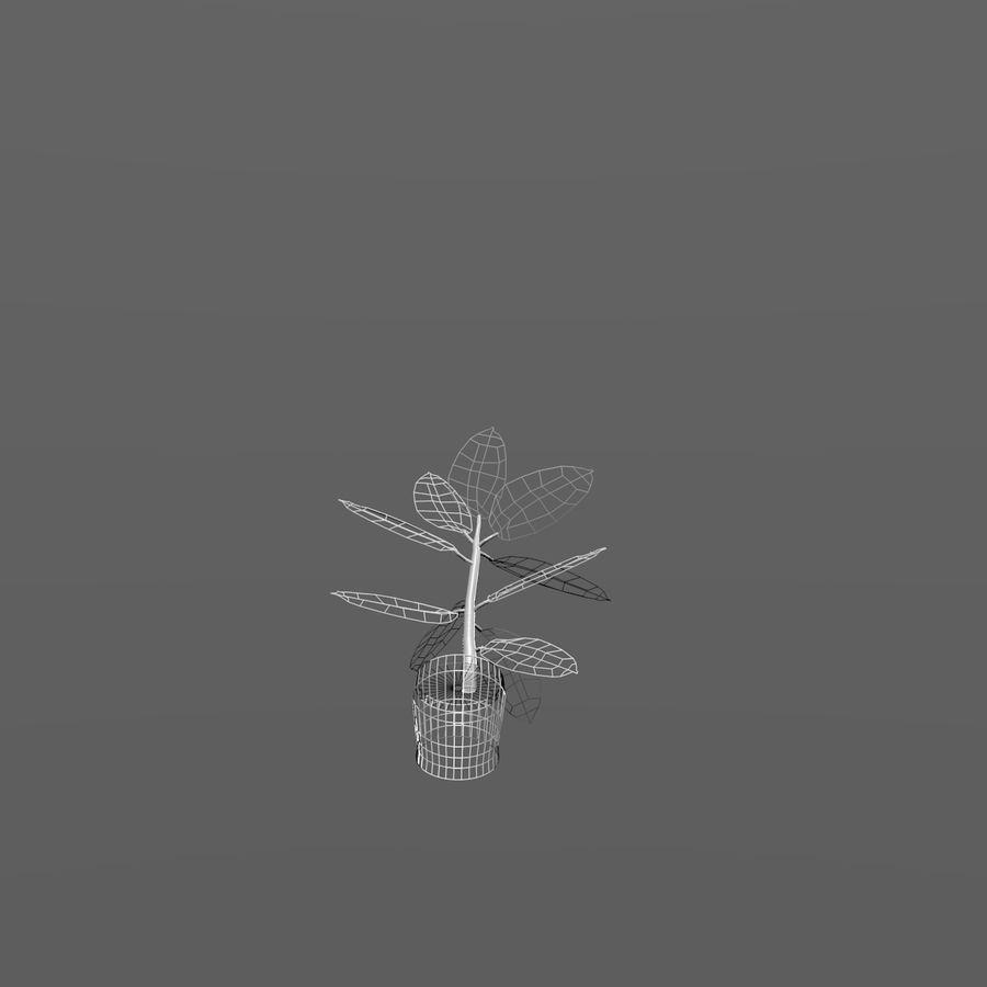 Planta de caucho interior / exterior royalty-free modelo 3d - Preview no. 4
