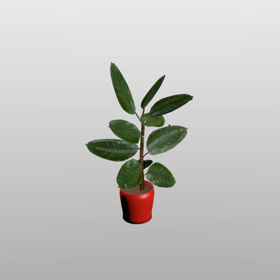 Planta de caucho interior / exterior royalty-free modelo 3d - Preview no. 2