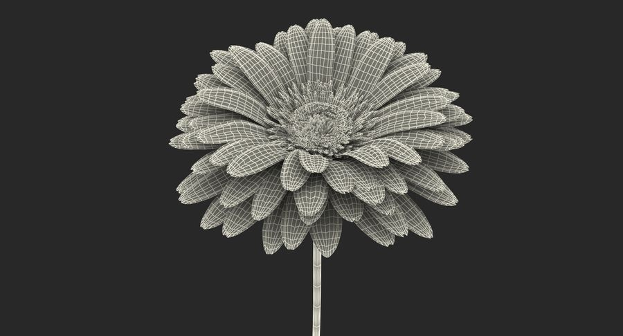 Red Gerbera Flower royalty-free 3d model - Preview no. 15